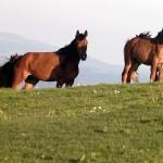 Amenzi mari pentru proprietarii cailor fără paşaport
