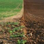 Sute de hectare sunt în acte, dar lipsesc din comune