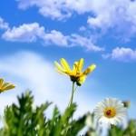 O săptămână cu temperaturi de peste 20 de grade: Primăvara vine în forţă