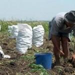 S-a mai făcut un pas spre înfiinţarea Camerei Agricole Neamţ