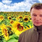 Floarea soarelui la număratul banilor