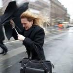 Pericol de vântoasă în Neamţ