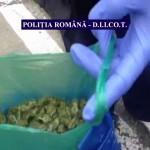 Traficanţii de cannabis n-au convins Bacăul