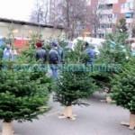 Anul acesta brazii de Crăciun pot fi achiziționați din zona unde înainte era hala centrală a Pieței mari din Piatra Neamț