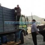 120 metri cubi lemn confiscat de poliţiştii nemţeni