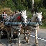 Caii – de la mustangi, la pașaport