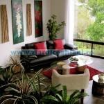 Plante de apartament, benefice sănătăţii omului