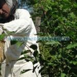 50.000 euro pentru apicultori