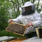 Bani pentru apicultori, dar şi sancţiuni pentru neconformităţi
