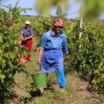 Activități agricole noi pentru zilieri