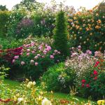 Sfaturi pentru grădina ta: Lucrări în decembrie