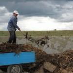 Activități de sezon: folosirea gunoiului de grajd