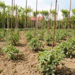 Sfaturi pentru grădină: combaterea buruienilor