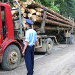 Două remorci de lemn confiscate într-o singură zi