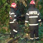 Copac căzut pe firele electrice