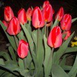 Sfaturi pentru grădină: flori care se sădesc toamna
