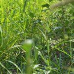 Idei de afaceri: covorul verde
