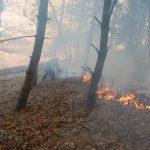 Un fumător a dat foc Vârfului Schitului de la Bâtca Doamnei