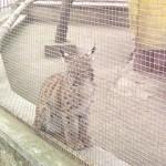parc zoo2