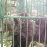 parc zoo4