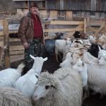 Ovine şi caprine