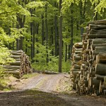 Tina-Păduri noi, foto