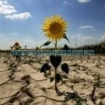 Tina seceta-floarea-soarelui