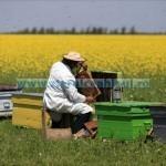 Tina-Minimis apicultură