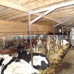 Tina-fermieri PFA, foto