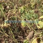 subventii-pentru-zonele-defavorizate-si-agromediu-640x330