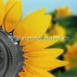 Eco fotografia