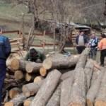 foto paznic lemne
