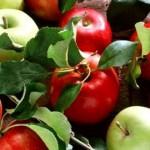 Tina-Fructe în școli