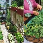 Tina-Agricultură în balcon