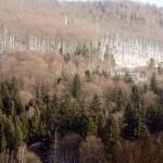 arbori Padure