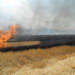 Incendiu miriste (2)