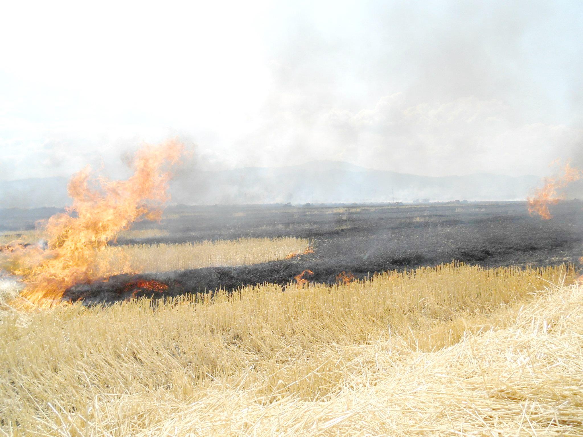 Accident rutier din cauza unui incendiu de miriște – Ziarul Ceahlaul